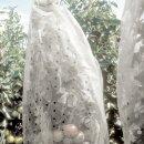 Tomaten unter einer transparenten Folienhaube