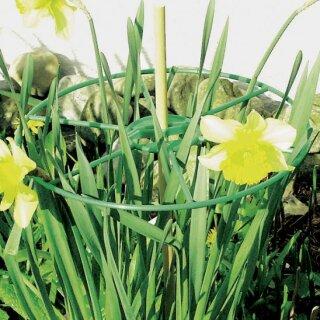 Staudenhalter in grün von Primaflora